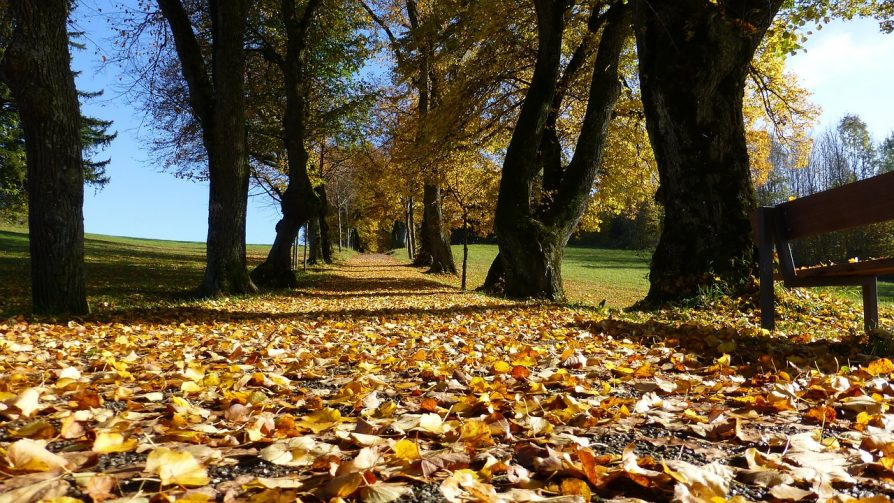 fallen leaves in Leicester & Loughborough