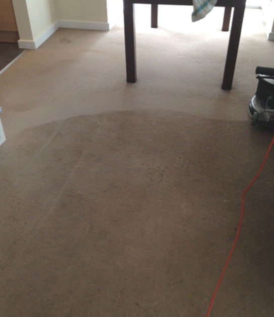 Before and after SJS carpet cleaning