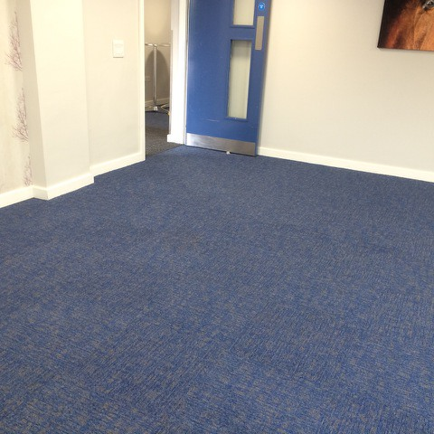 carpet cleaned by SJS
